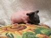 Малышка 1 месяц -бело-черная